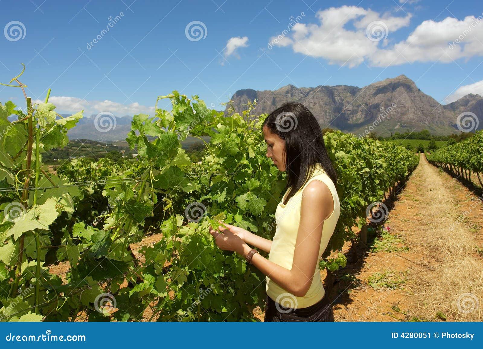 Slim mulatto girl inspects grape vine