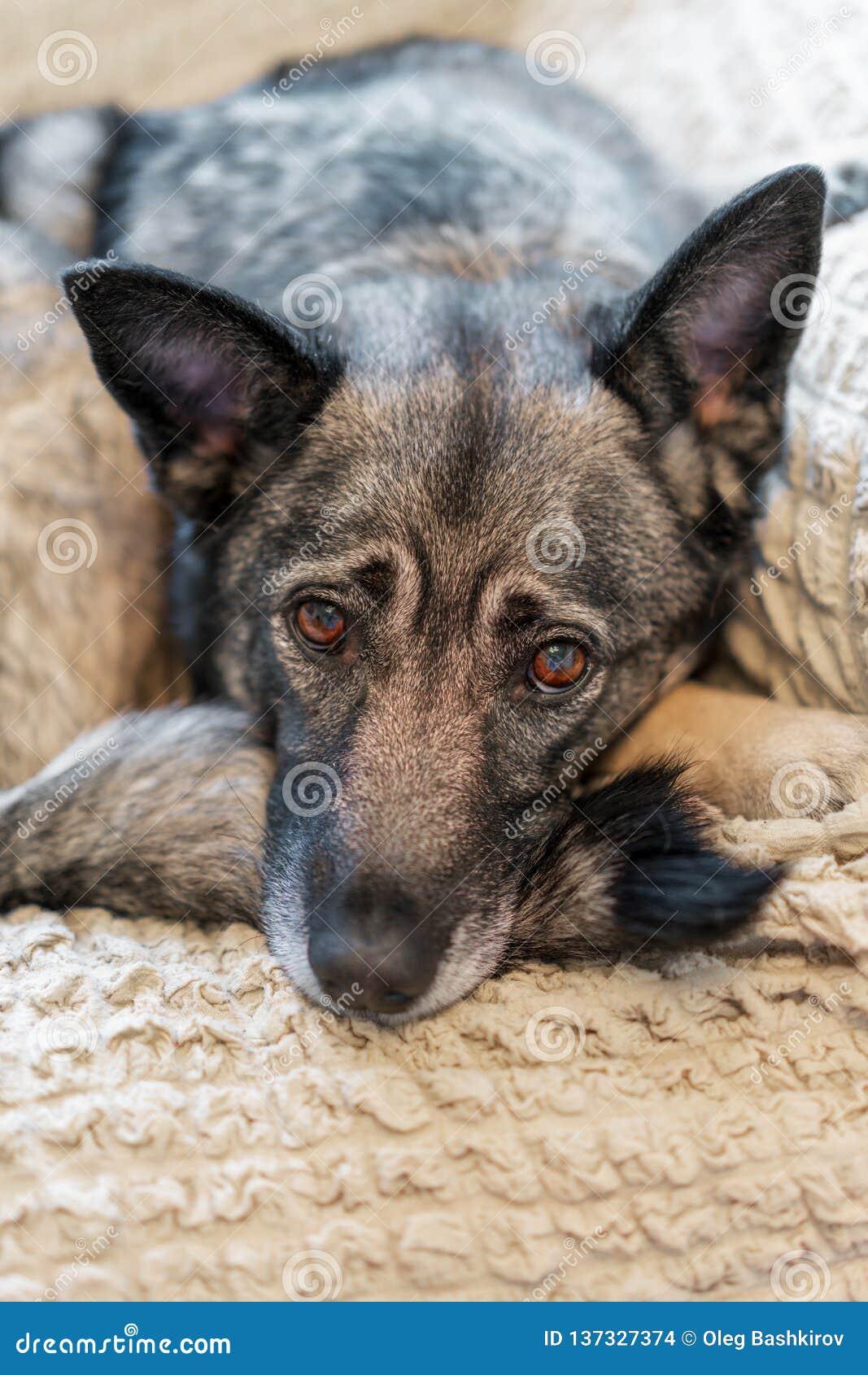 Slimme hond die op zijn eigenaar wachten