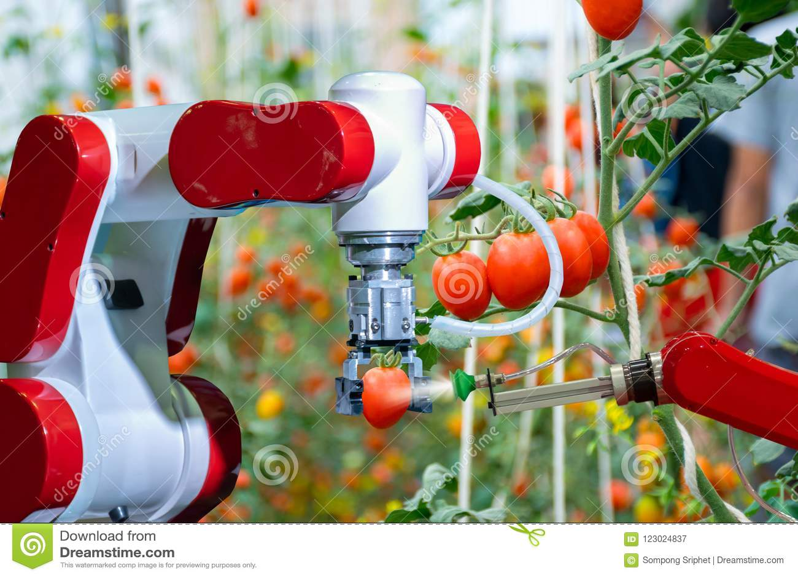 Slimme robotachtige landbouwers in automatisering van de landbouw de futuristische robot aan het werk aan nevel chemische meststo