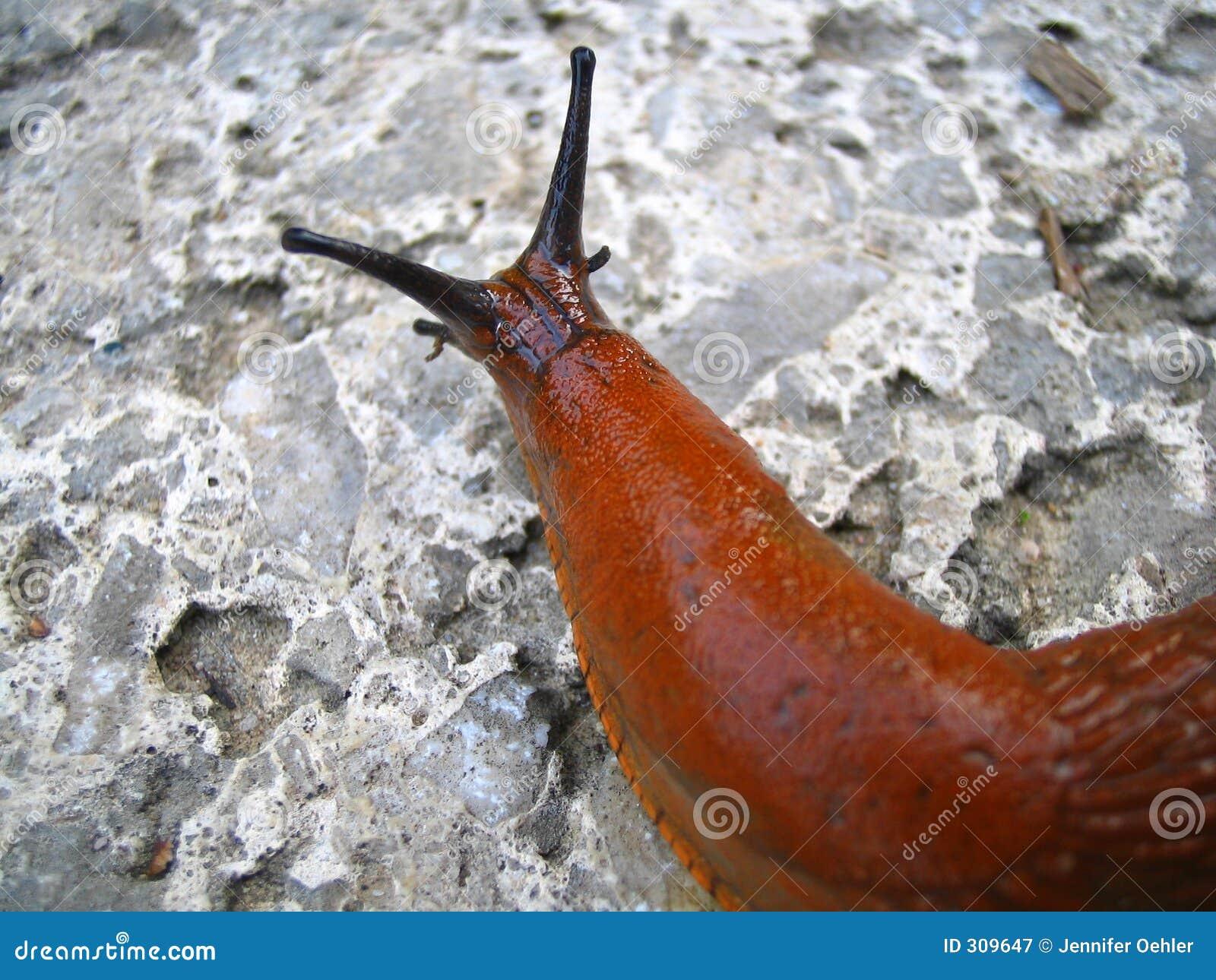 141 best Snails - Slugs images on Pinterest   Snails, Animals and ...