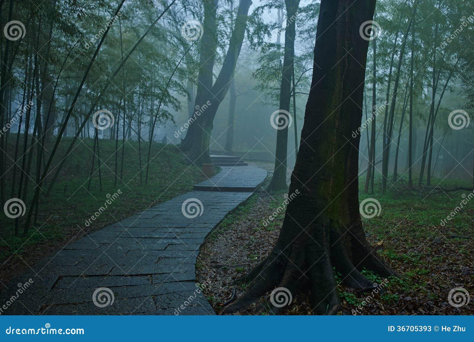 Slingrande ho för trevlig bana en Misty Forest