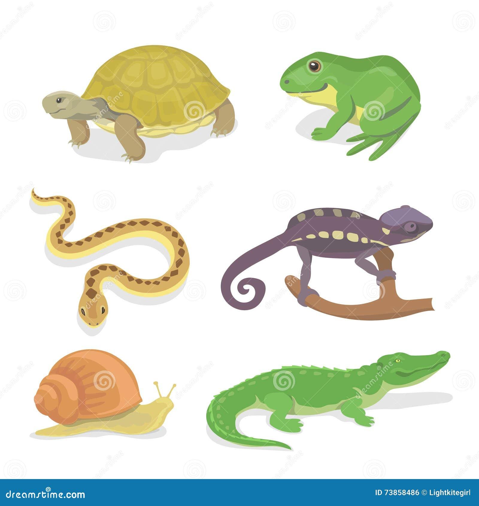 Slingrar den dekorativa uppsättningen för reptilar och för amfibier av krokodilsköldpaddan kameleonten