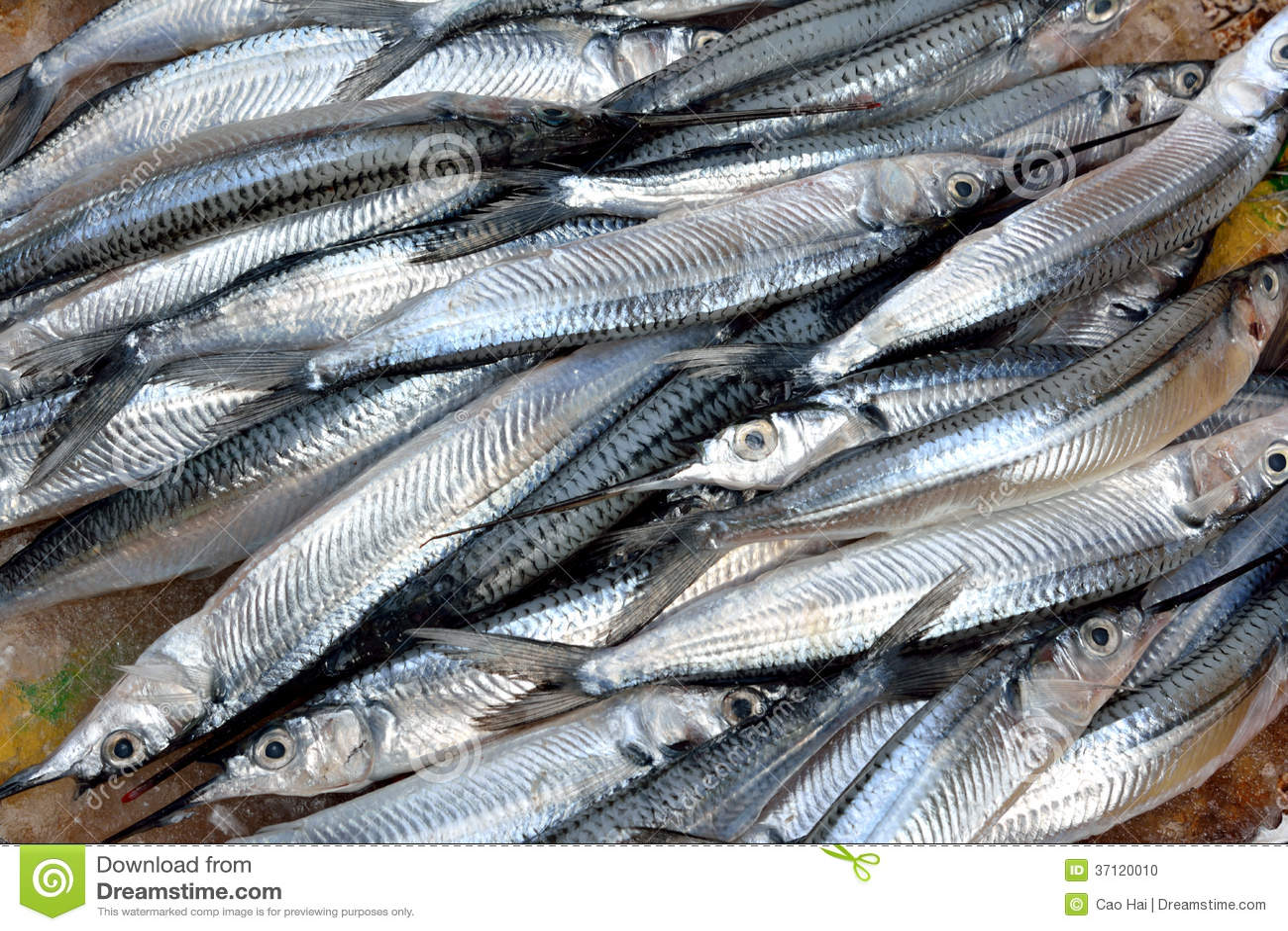Sliver fish