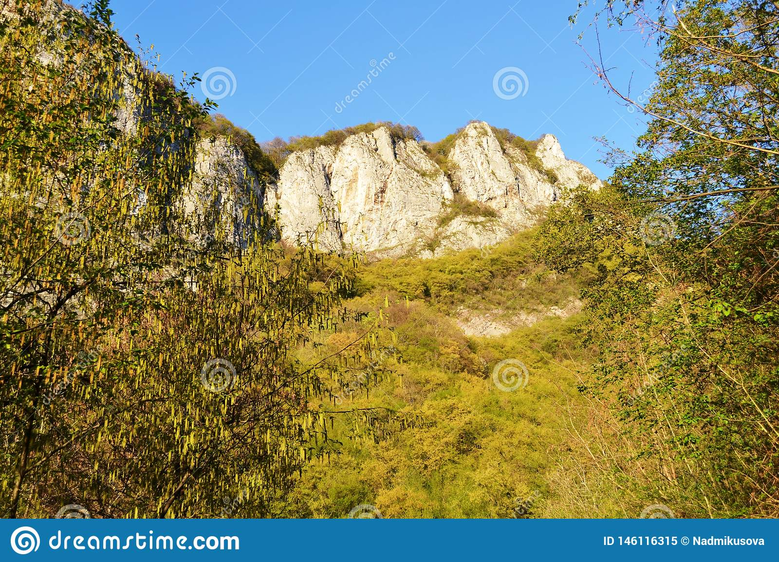 Slope covered with spring vegetation, blossoming catkins of birch trees in the forest and blue sky background.