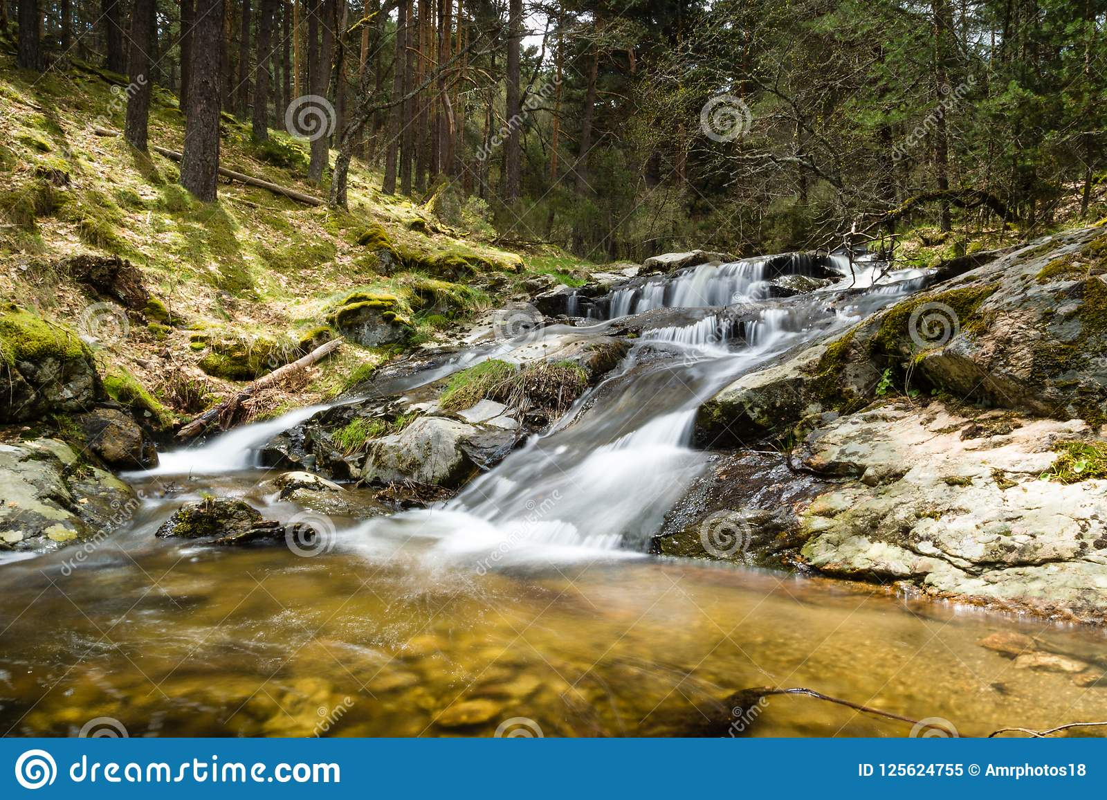 Slow motion waterfall in a beautiful pine trees forest in Mojonavalle, Canencia, Madrid.