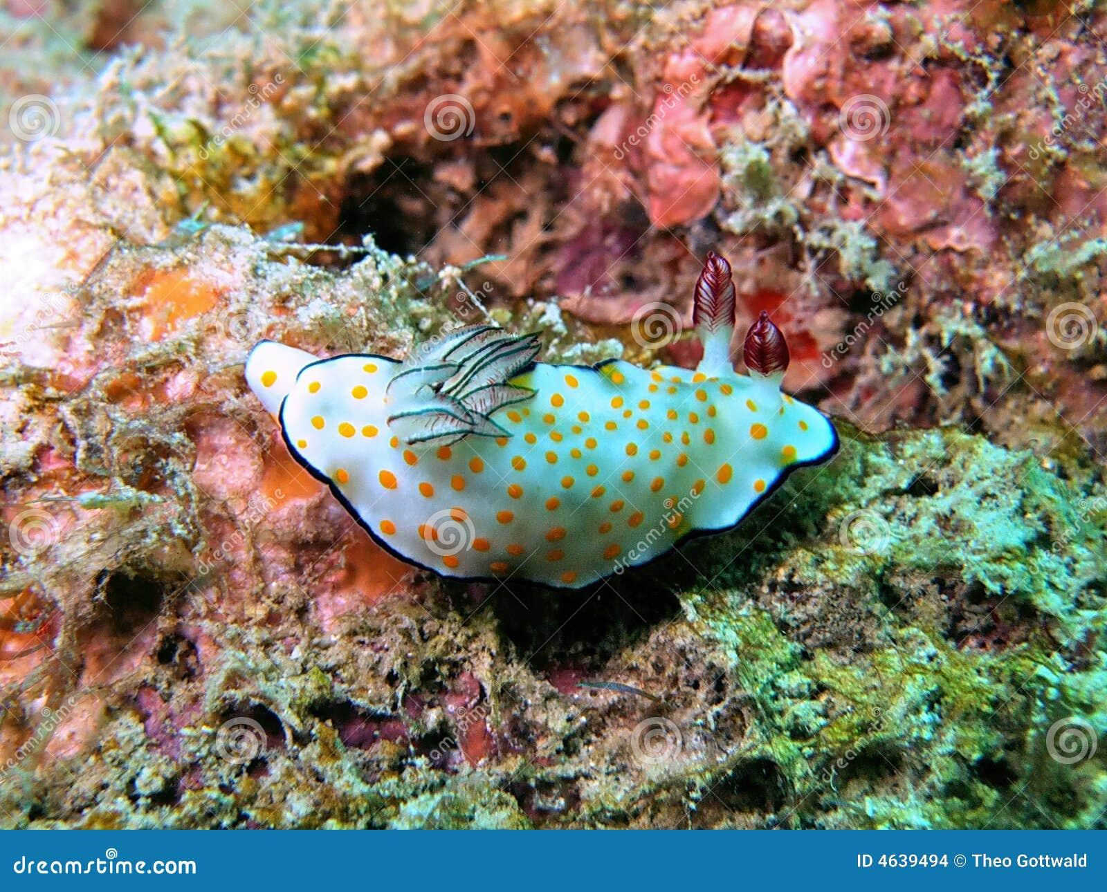 Slug de mar colorido