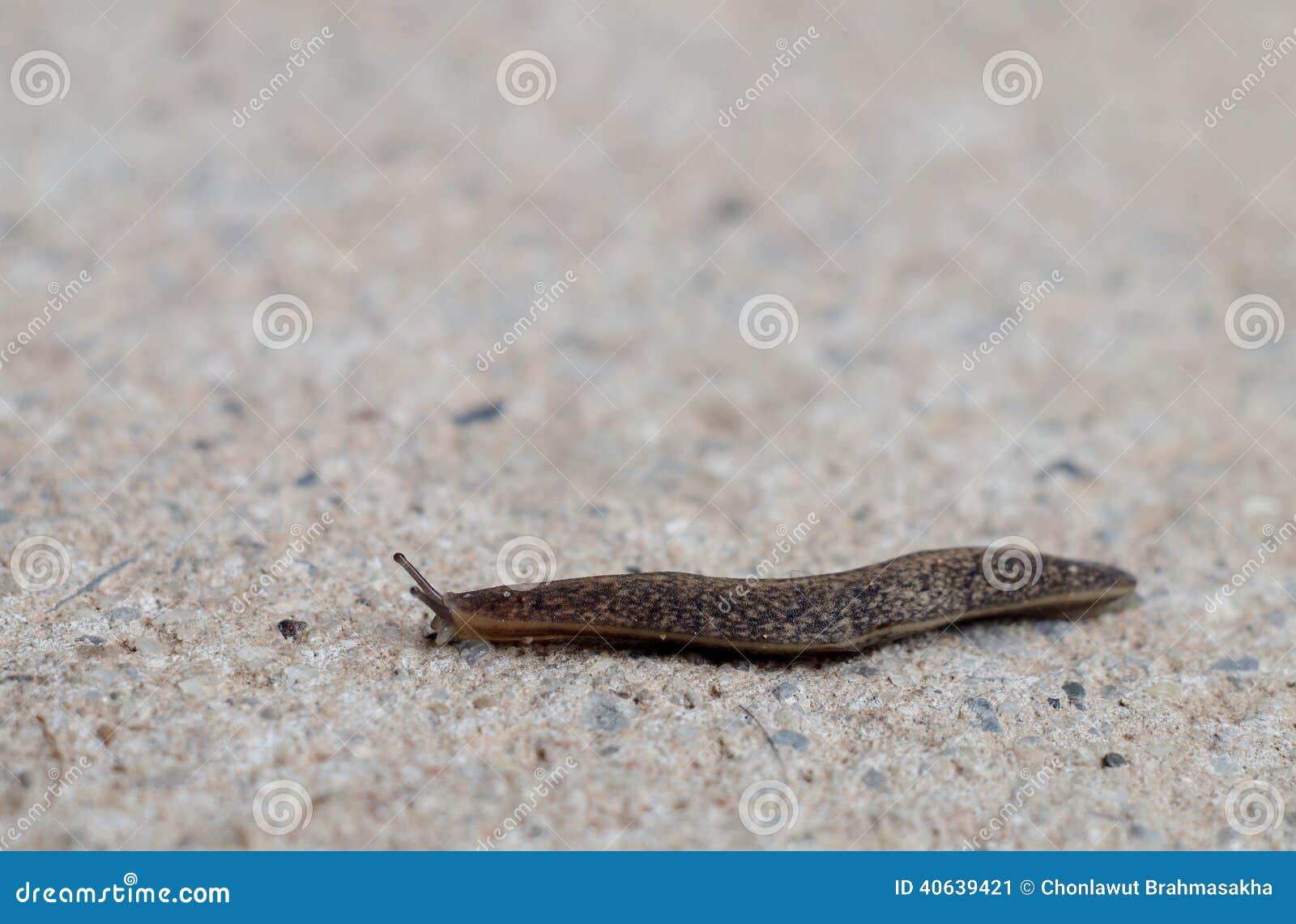 Slug On The Floor Stock Image Image Of Animal Move