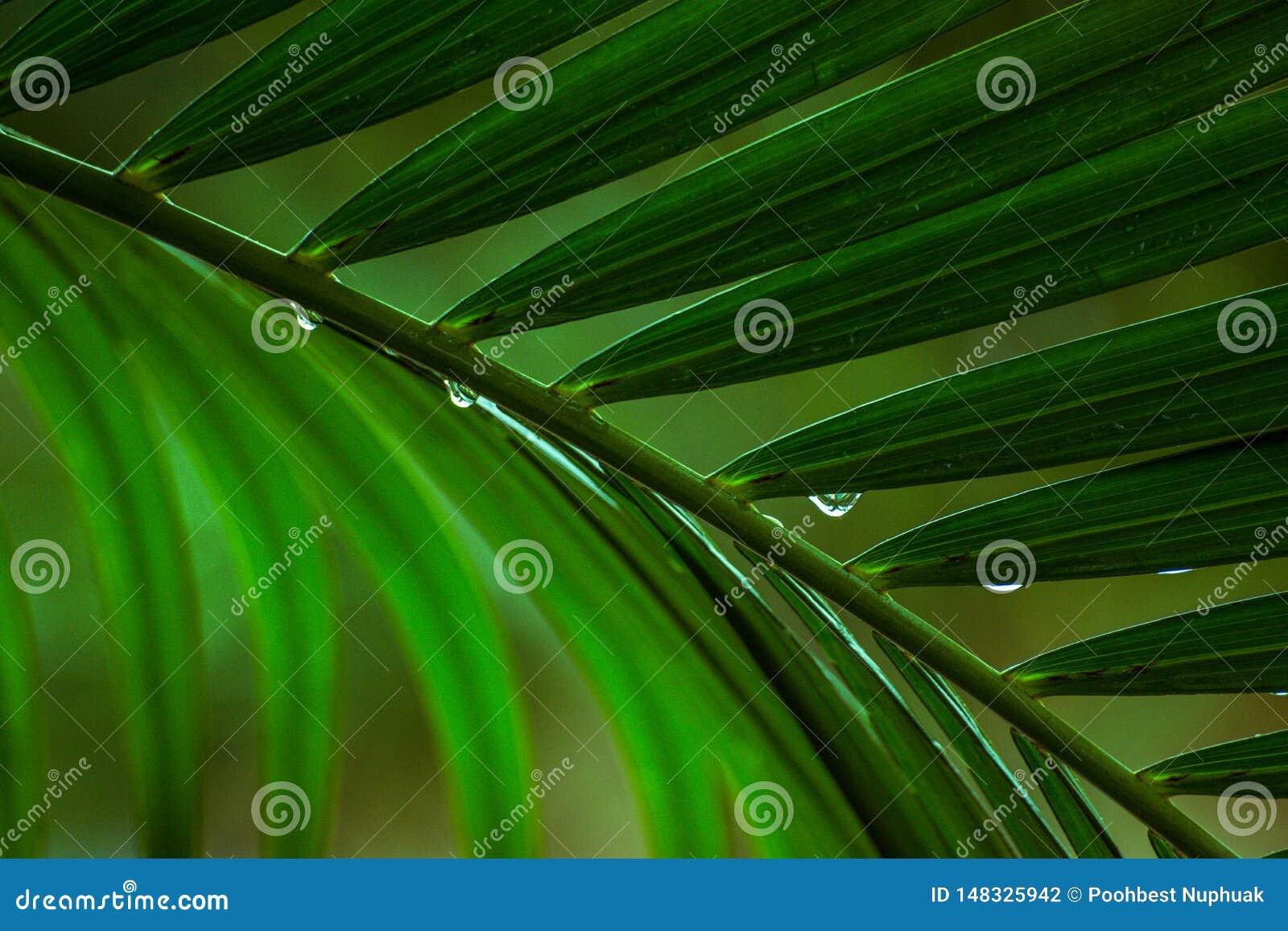 Sluit omhoog de bladeren van palmen