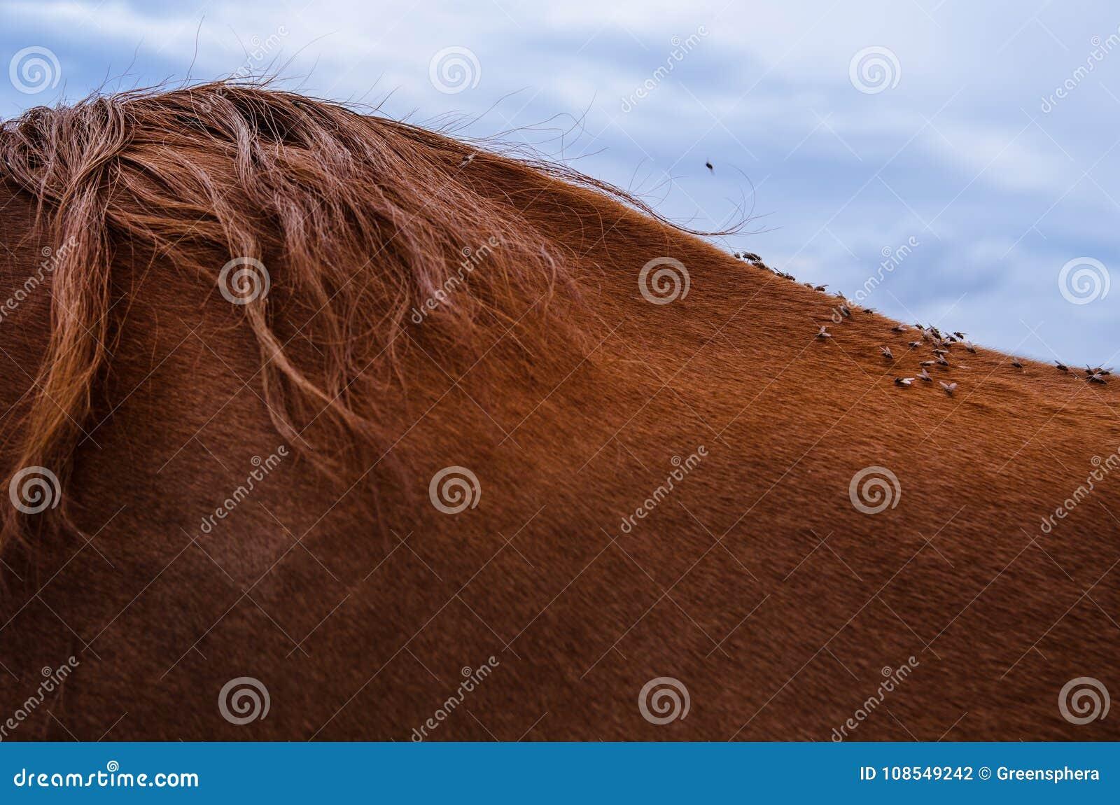 Sluit omhoog dozens vliegen op de rug van een bruin paard met mooi haar