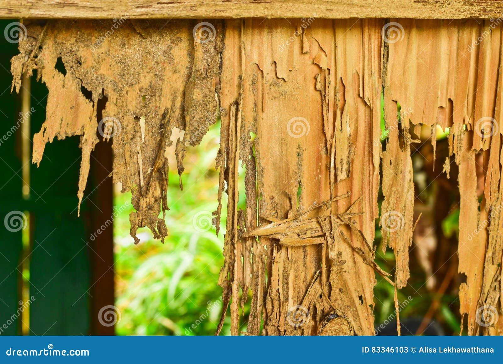 Sluit omhoog een deel van een houten bederf