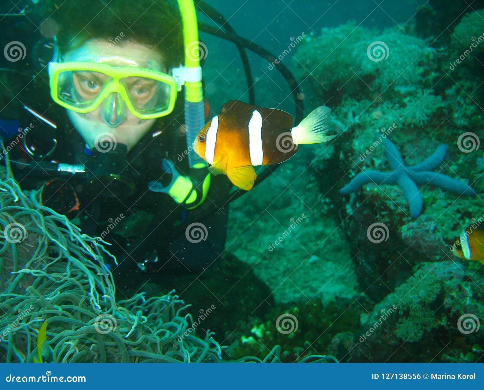 Sluit omhoog foto van de clownvissen De jonge vrouwenscuba-duiker bekijkt de clownvissen