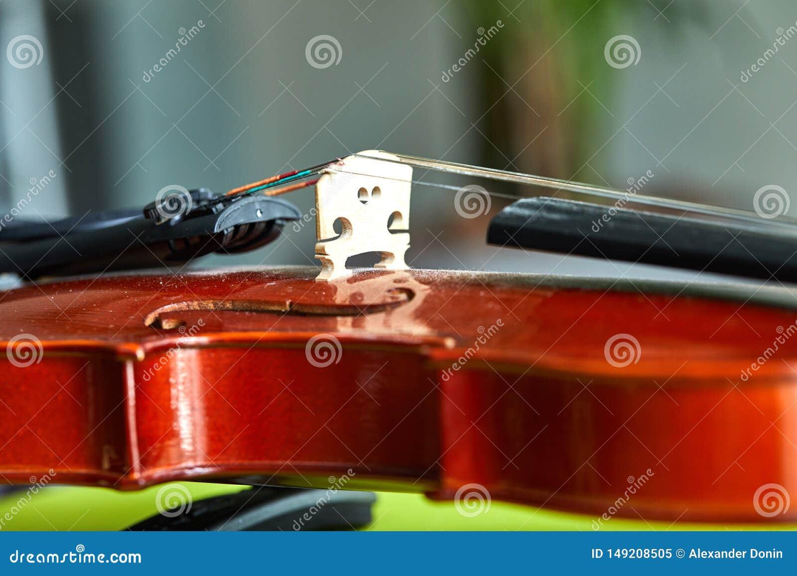 Sluit omhoog geschoten van een viool, zeer zachte def van gebied
