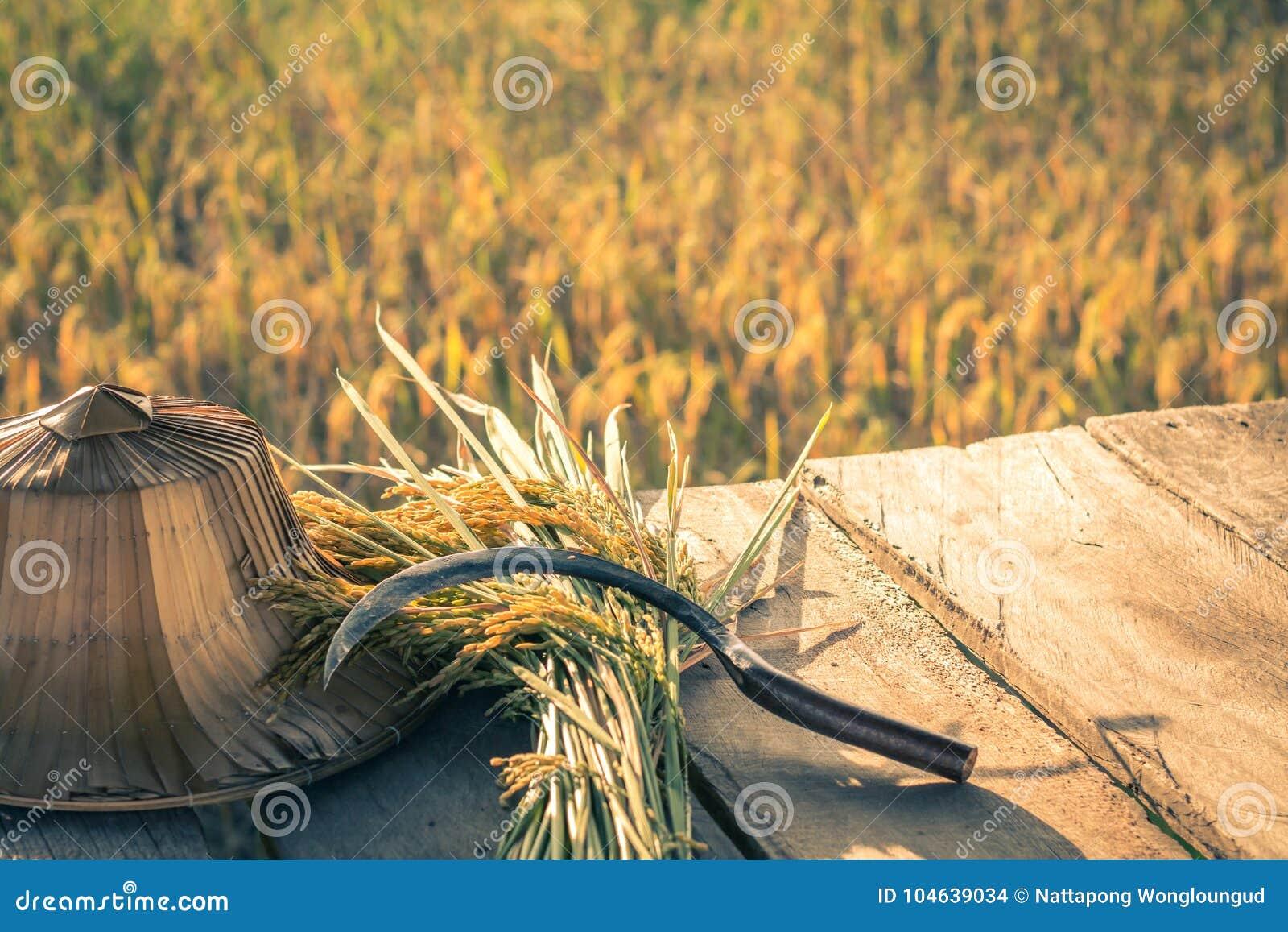 Download Sluit Omhoog Gouden Padieveld Stock Foto - Afbeelding bestaande uit nieuw, cornfield: 104639034