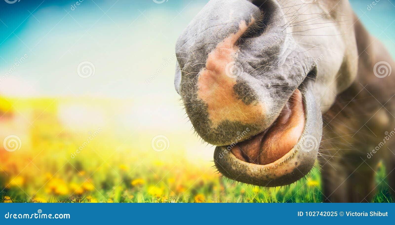 Sluit omhoog grappig paardgezicht bij de zomerweiland
