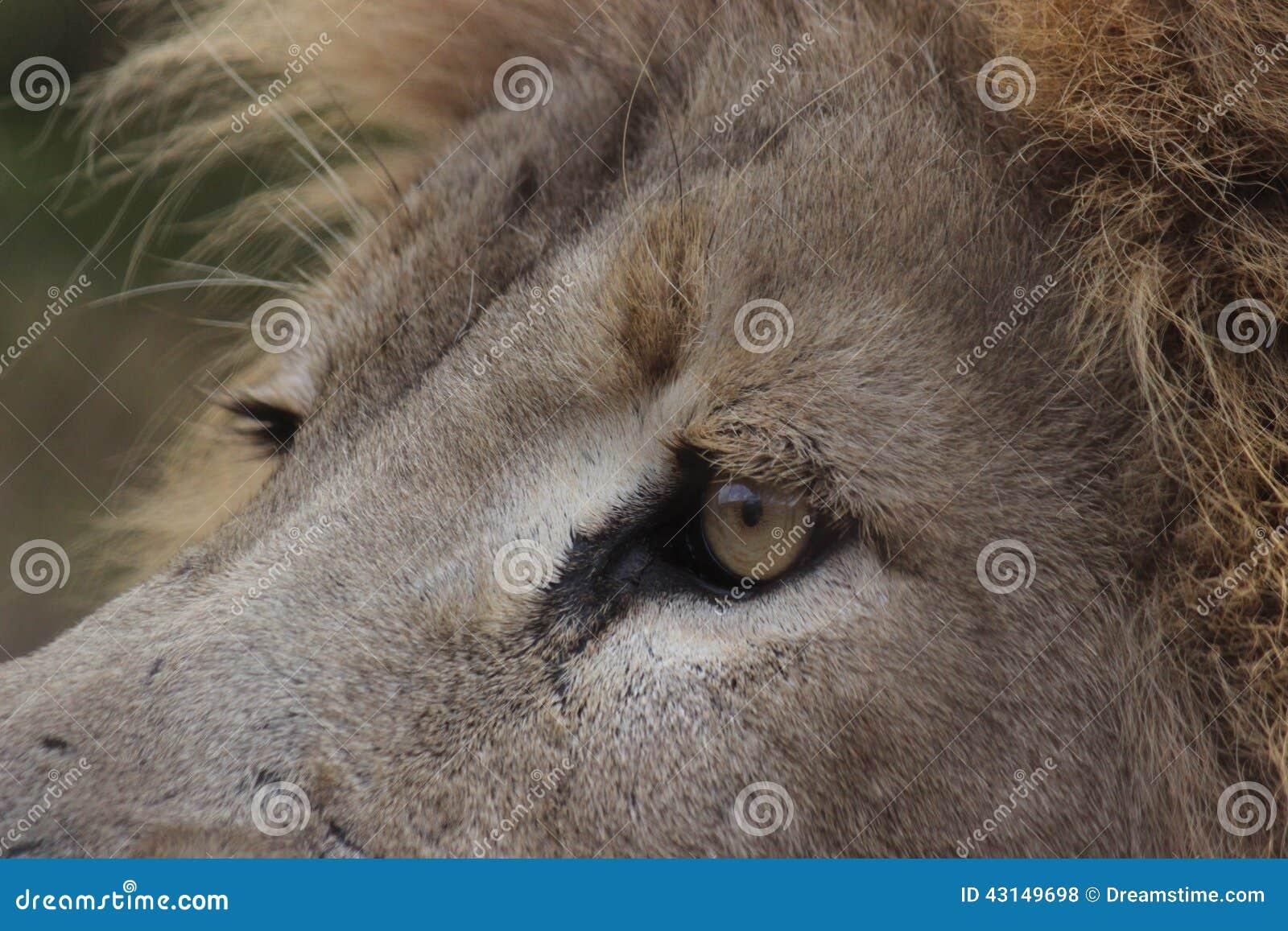 Sluit omhoog Leeuw