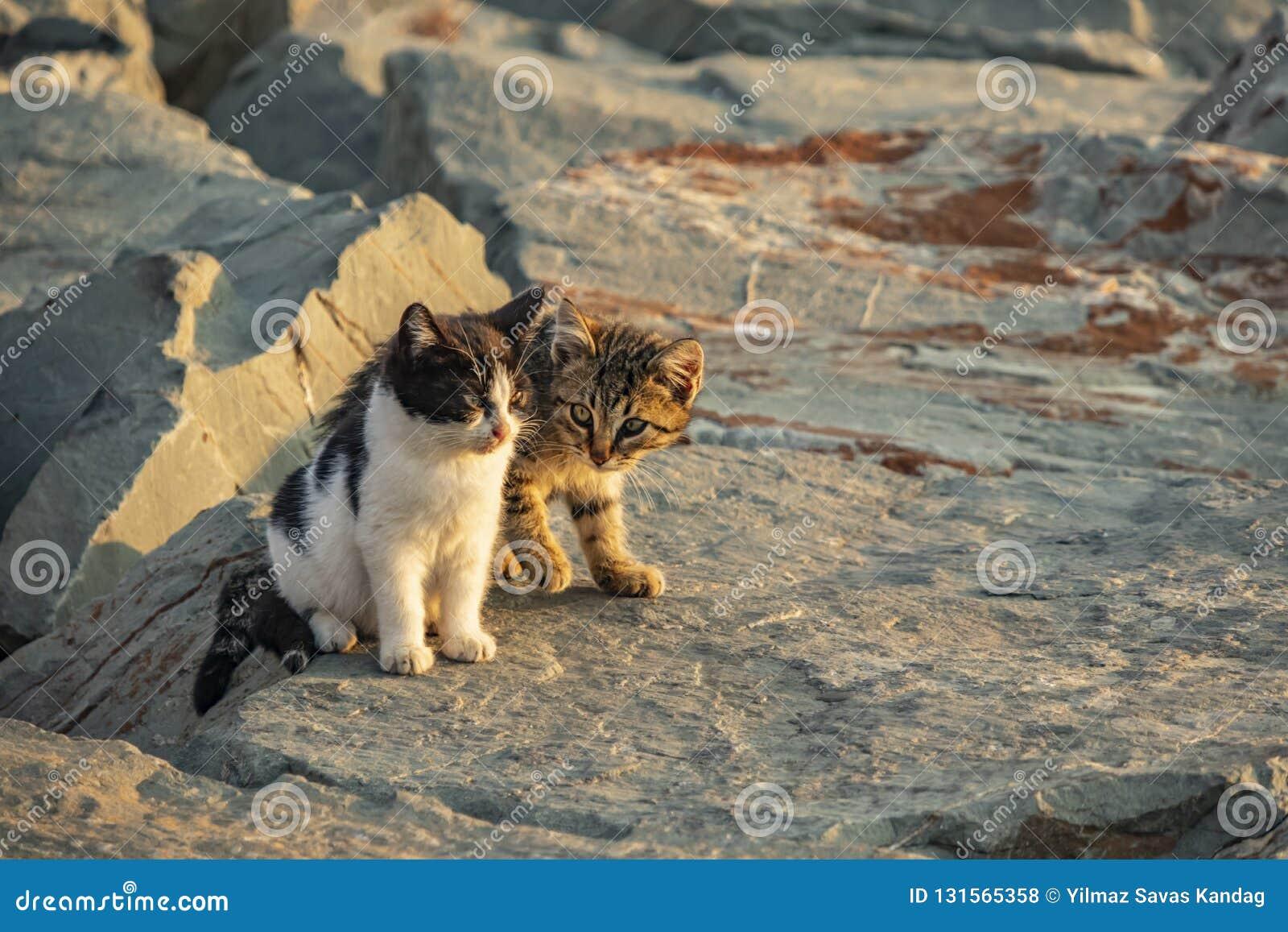 Sluit omhoog leuke vriendenkatten