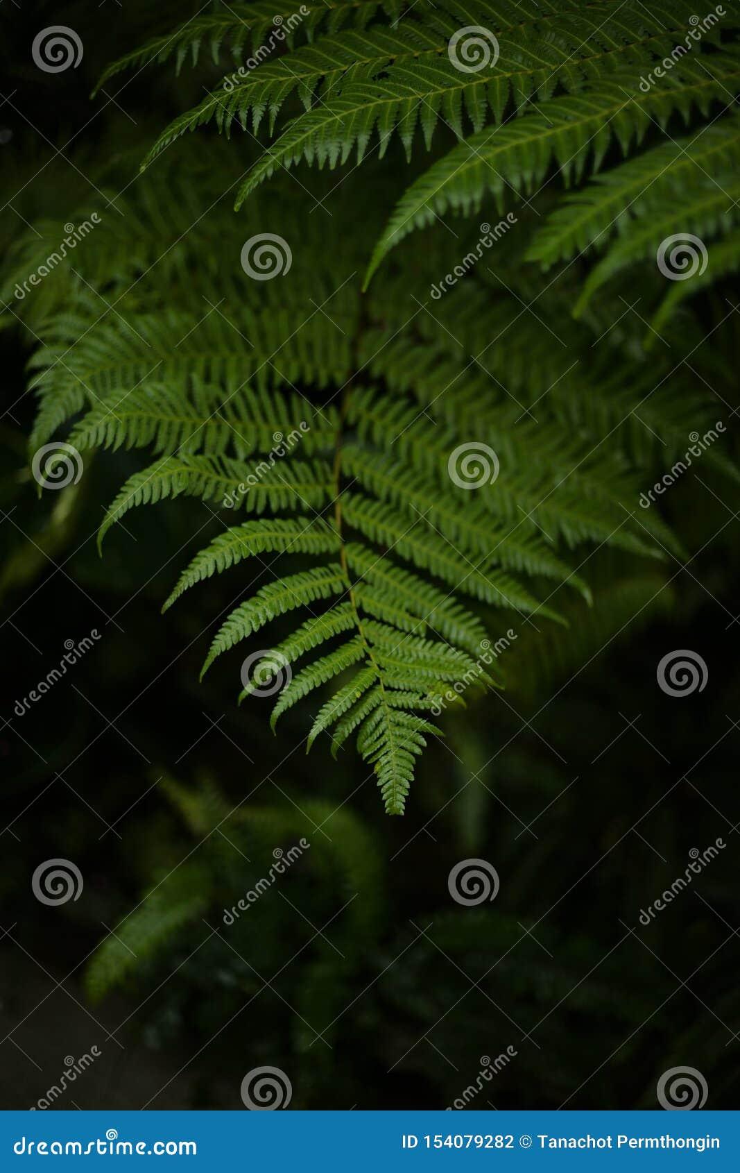 Sluit omhoog mooi groen blad
