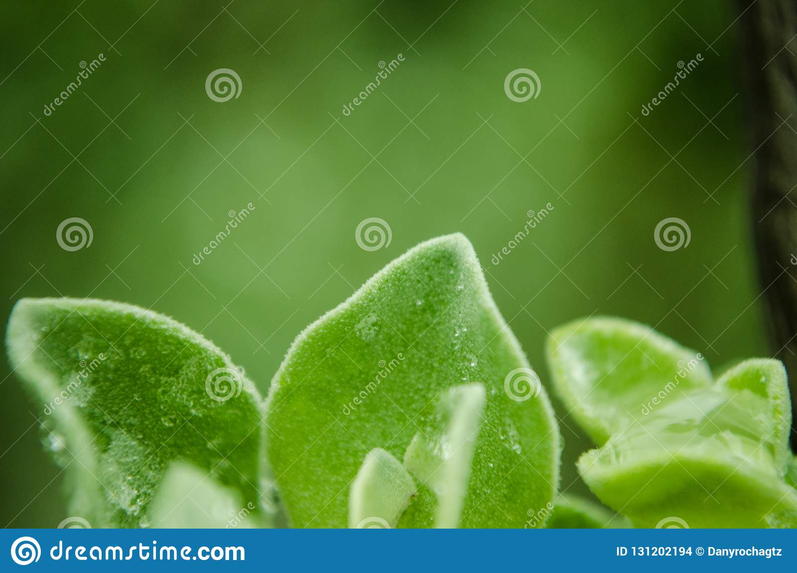Sluit omhoog op groene bladeren met regendruppels op hun bladeren, regenachtige dag op groene bladeren