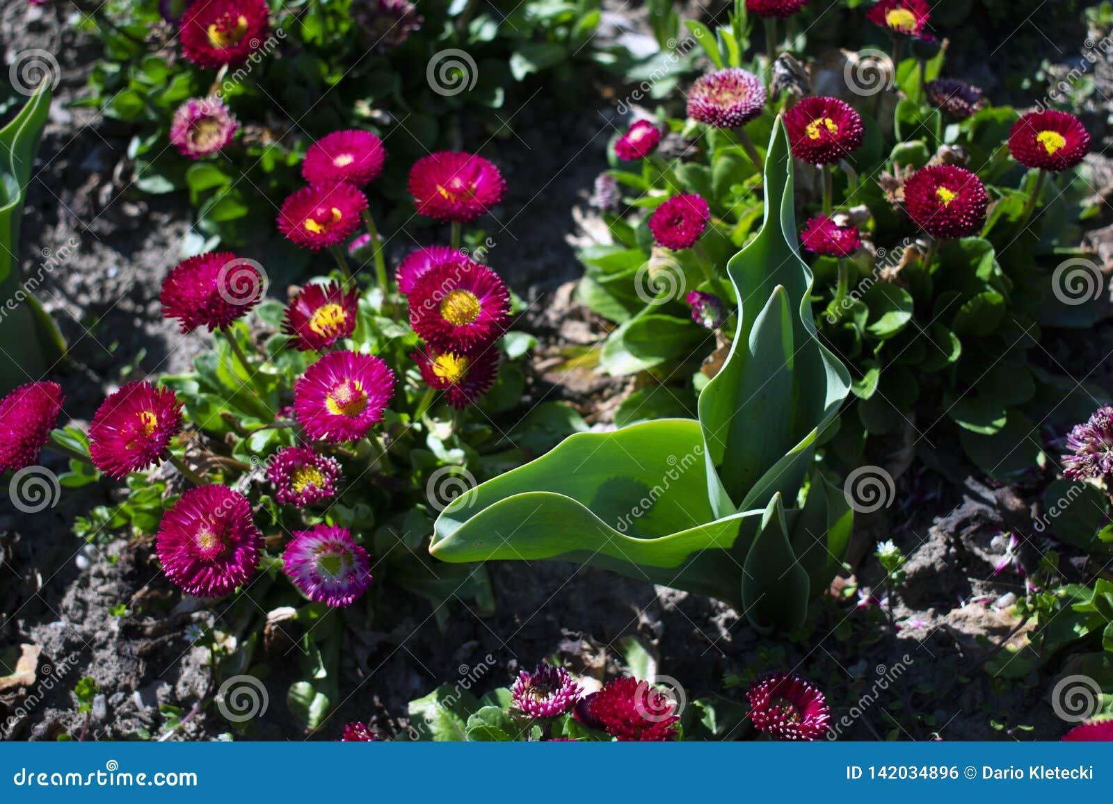 Sluit omhoog van bloemen in het park