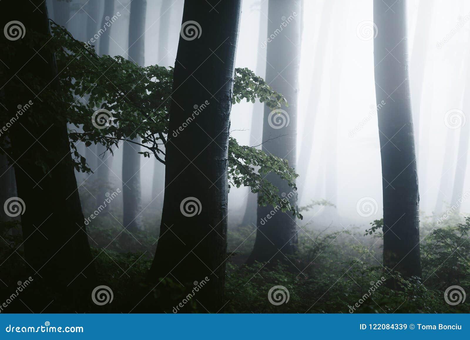 Sluit omhoog van donkere bomen in griezelig mistig bos Vreemd helder licht in de afstand De muziek van de nacht
