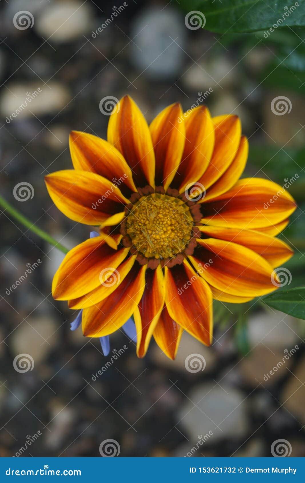 Sluit omhoog van een bloem