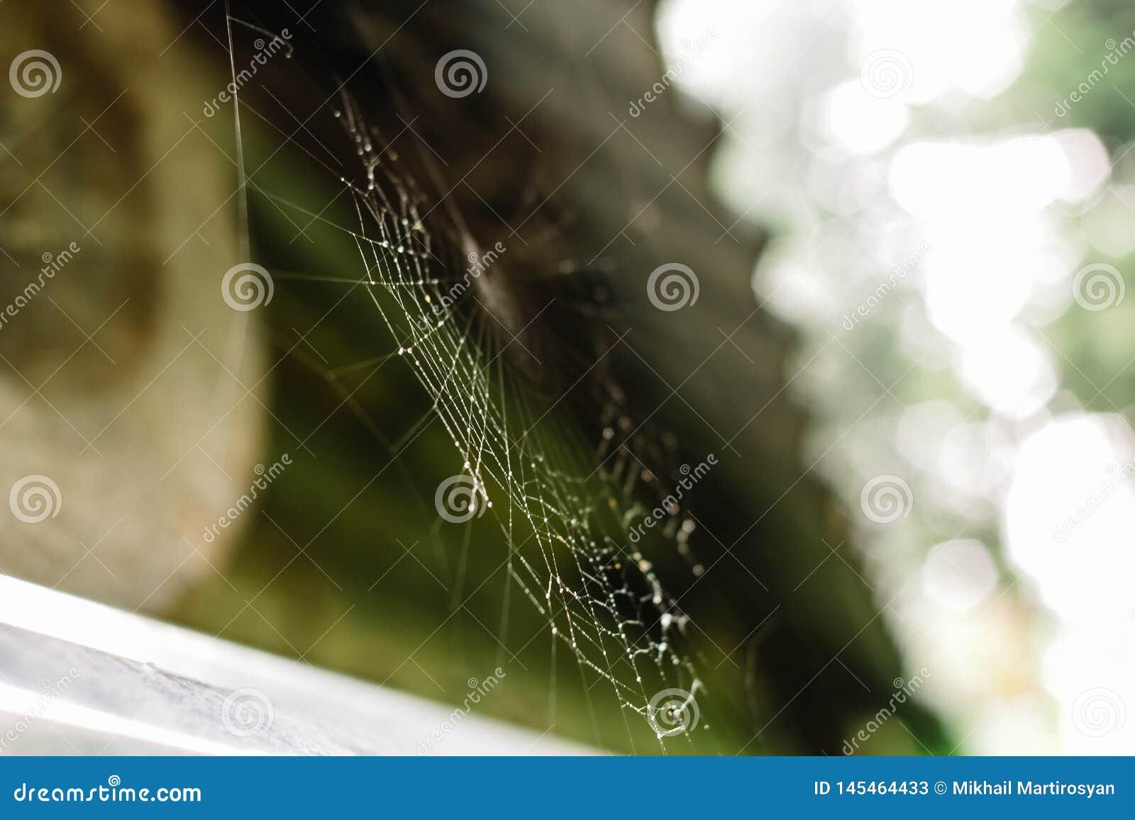 Sluit omhoog van een spiderweb met dalingen van dauw