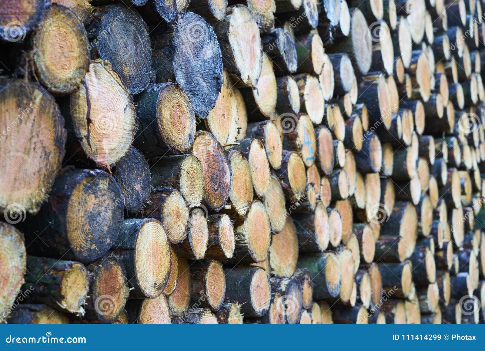 Sluit omhoog van een stapel vers felled boomboomstammen met ondiepe D