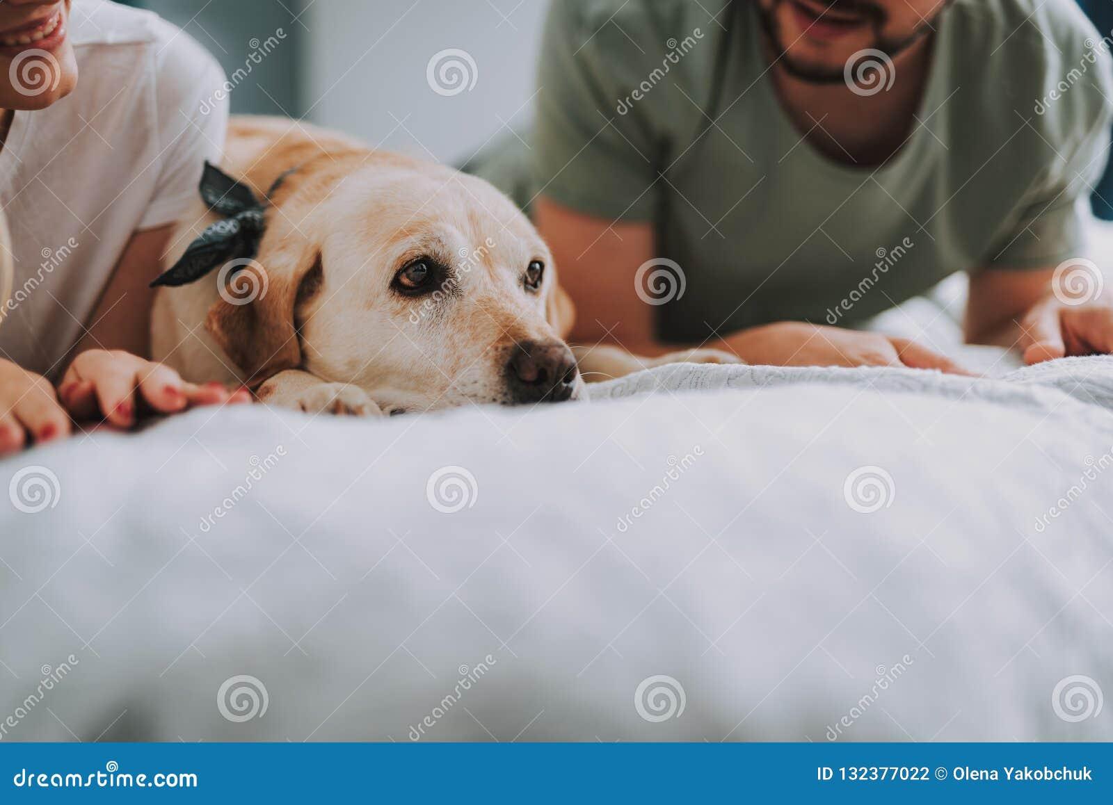 Sluit omhoog van een vrolijk jong paar die met hun hond rusten