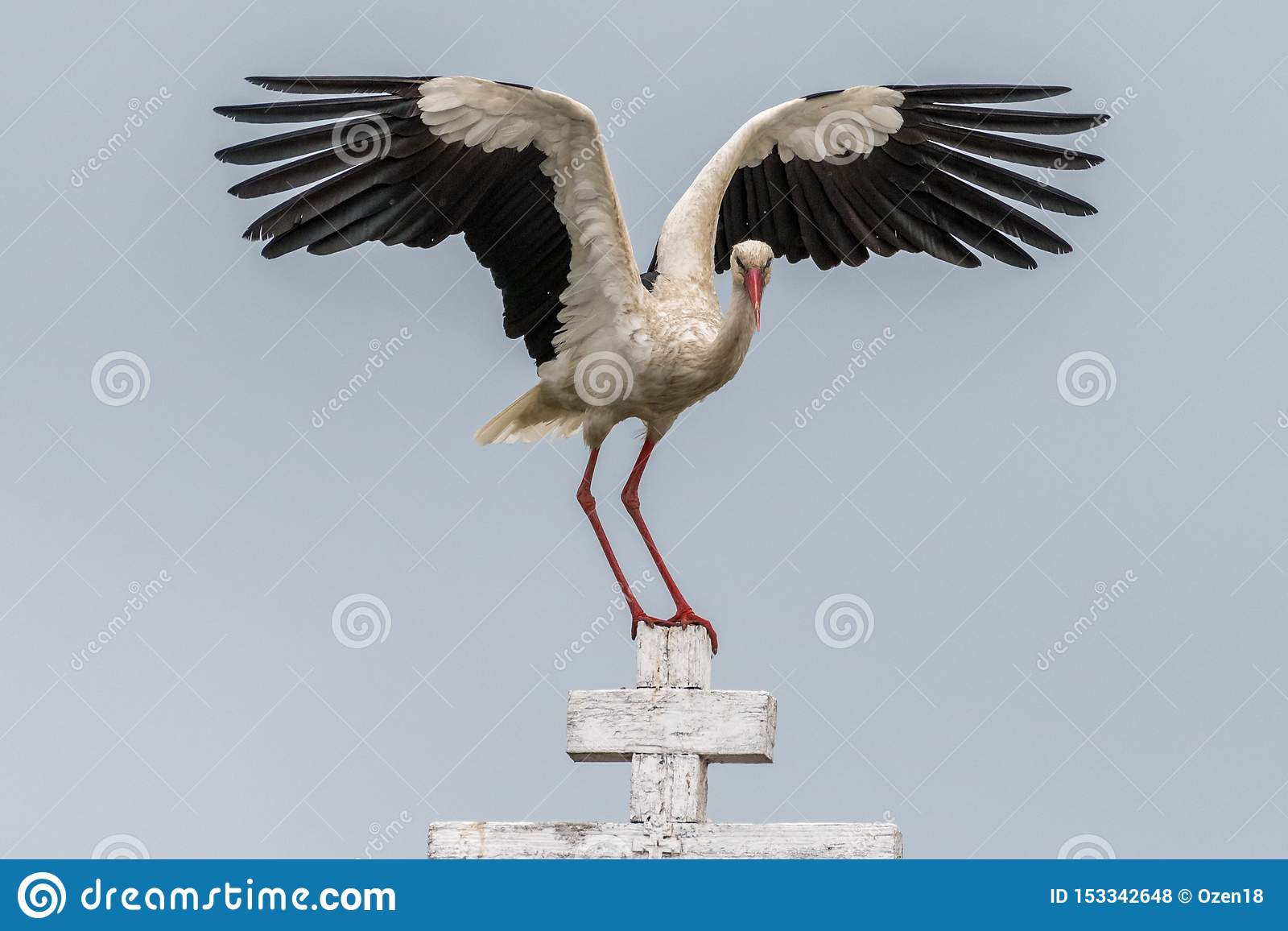 Sluit omhoog van een witte ooievaarsvogel in wild Roemenië