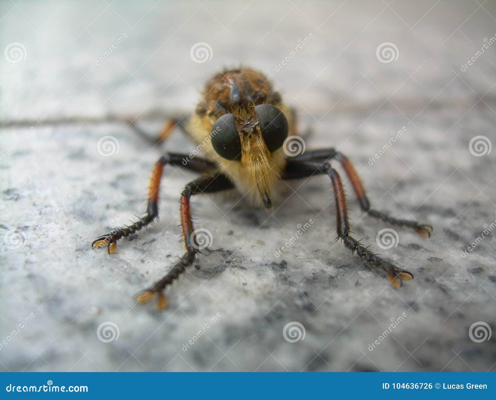 Download Sluit Omhoog Van Insect Zich Bevindt Op Marmer Stock Foto - Afbeelding bestaande uit voorgrond, hoek: 104636726