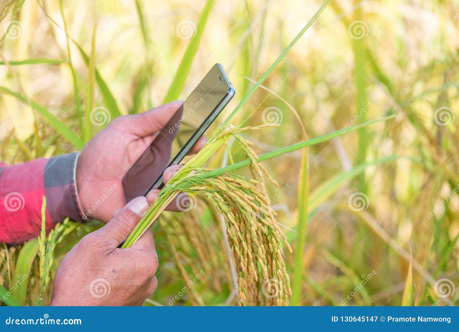 Sluit omhoog van Landbouwershand gebruikend mobiele telefoon of tablet die zich binnen bevinden