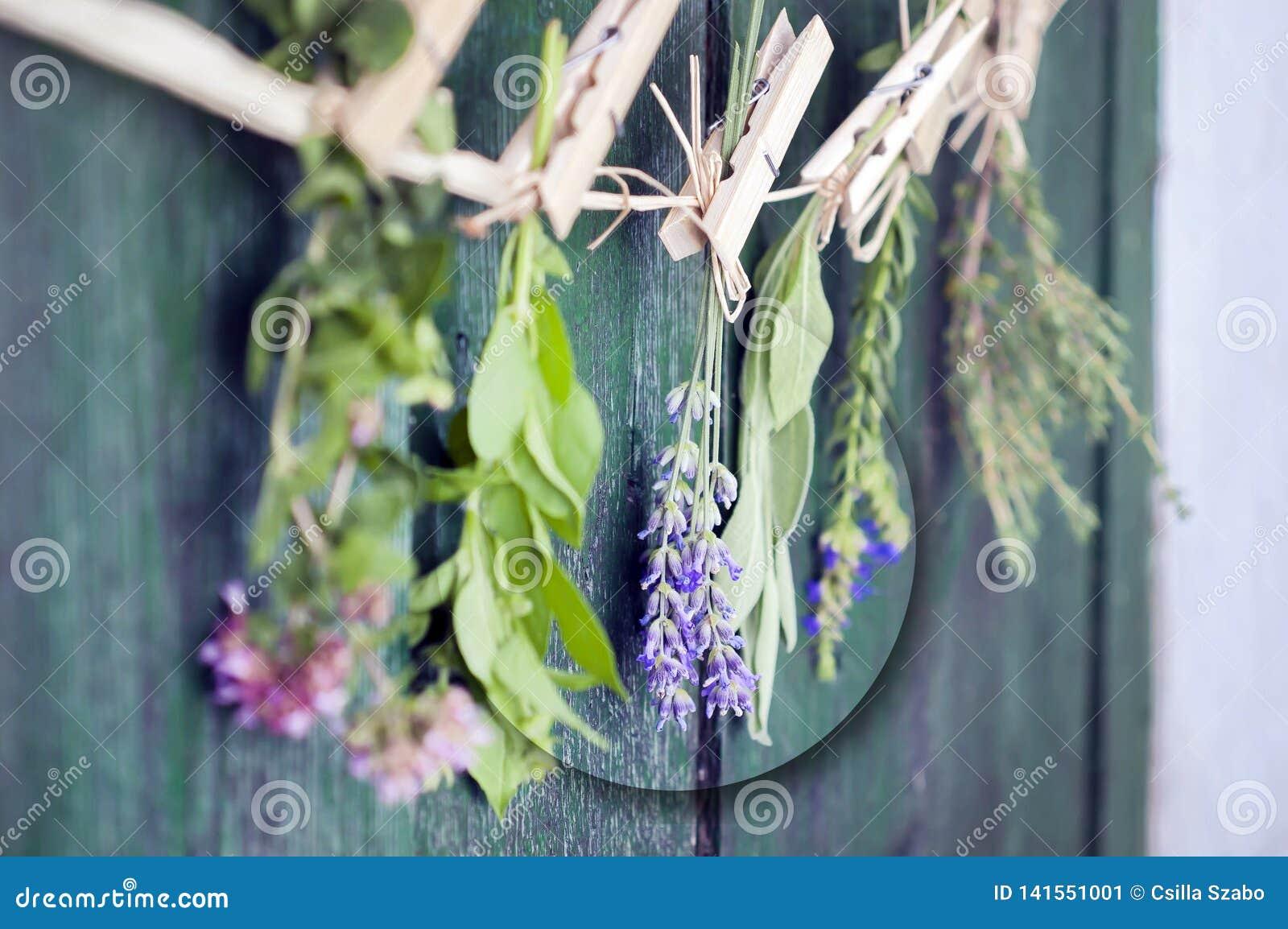 Sluit omhoog van Mediterrane kruidenboeketten, salie, basilicum, lavendel, thyme bij het rustieke groene houten lijst hangen als