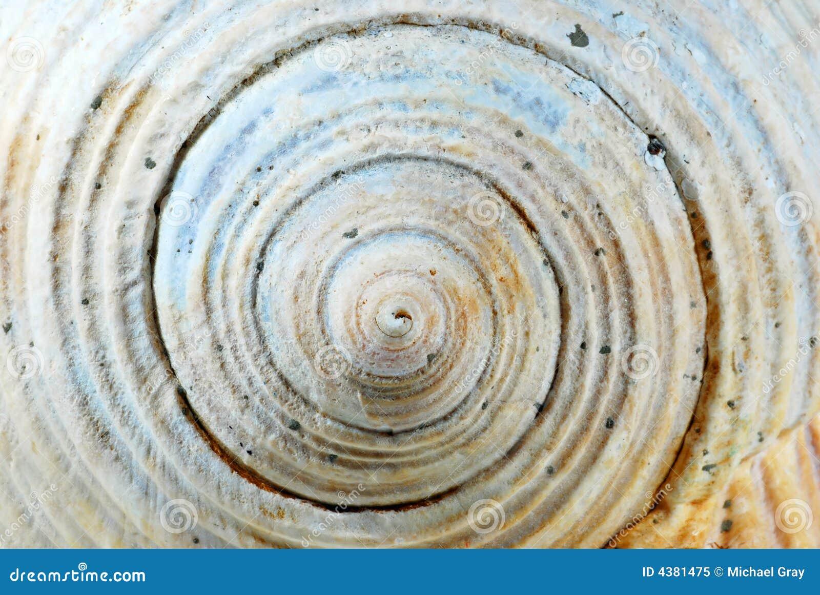 Sluit omhoog van overzeese shell