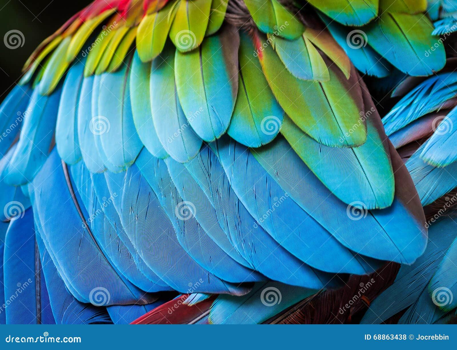 Sluit omhoog van papegaaiveren voor achtergrond