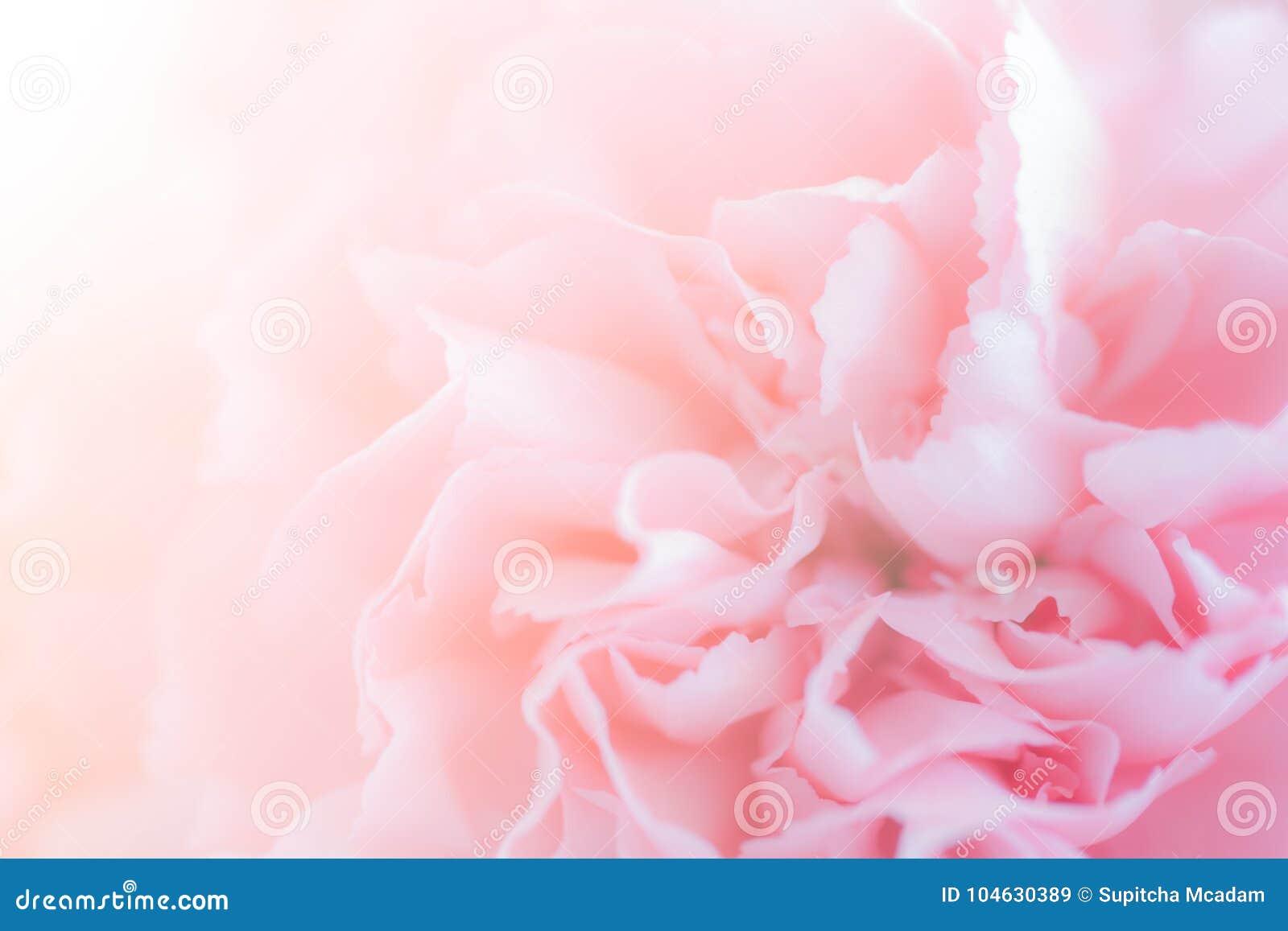 Download Sluit Omhoog Van Roze Anjerbloemen Stock Afbeelding - Afbeelding bestaande uit anjer, boeket: 104630389
