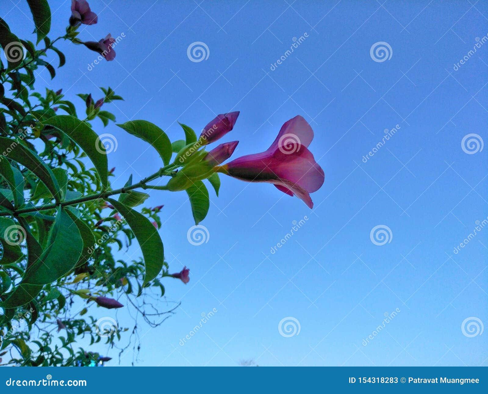 Sluit omhoog van roze bloeiende installatie met blauwe hemelachtergrond