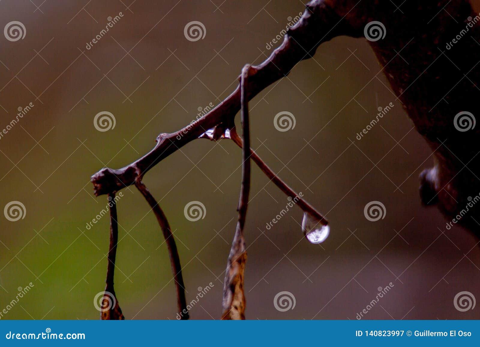 Sluit omhoog van tak met regendruppels