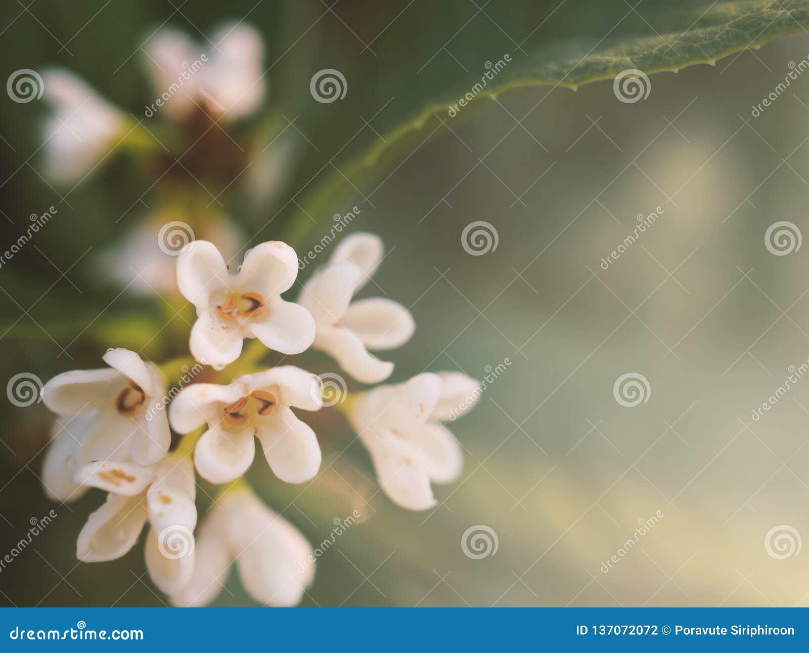Sluit omhoog witte boeketbloem