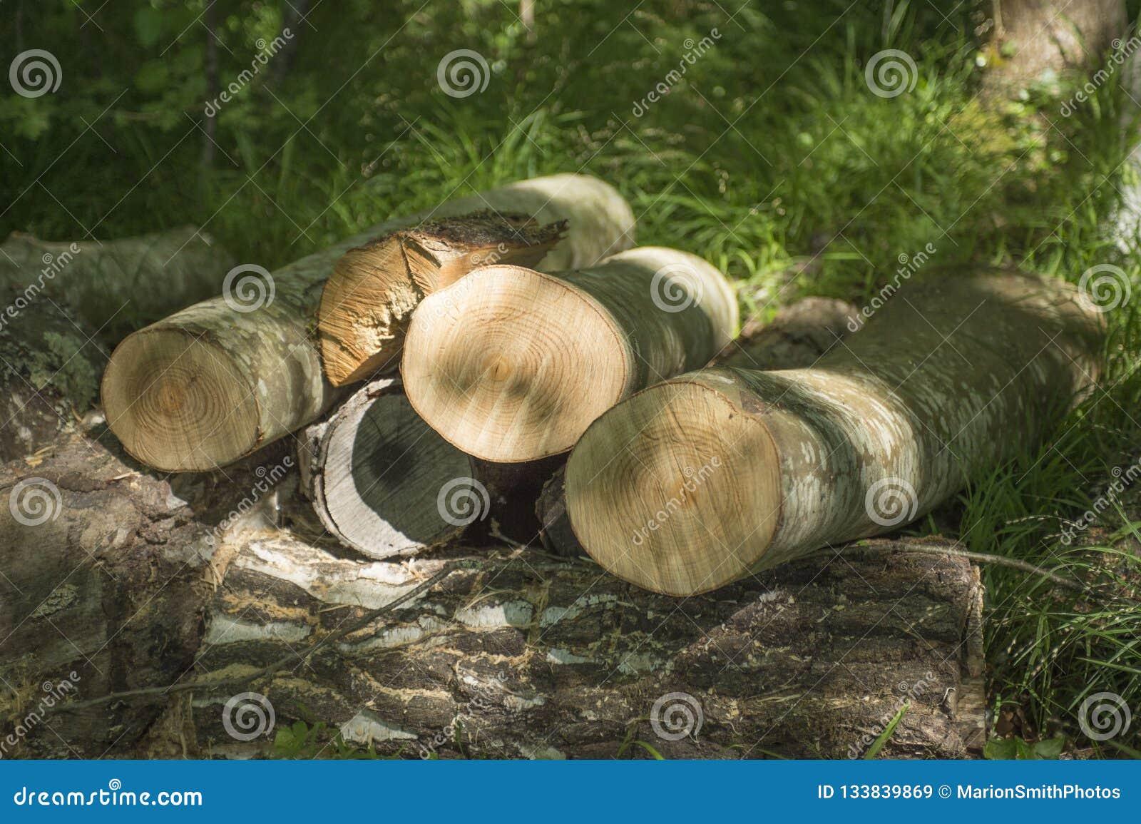 Sluit van hout het programma opent omhoog vleklicht