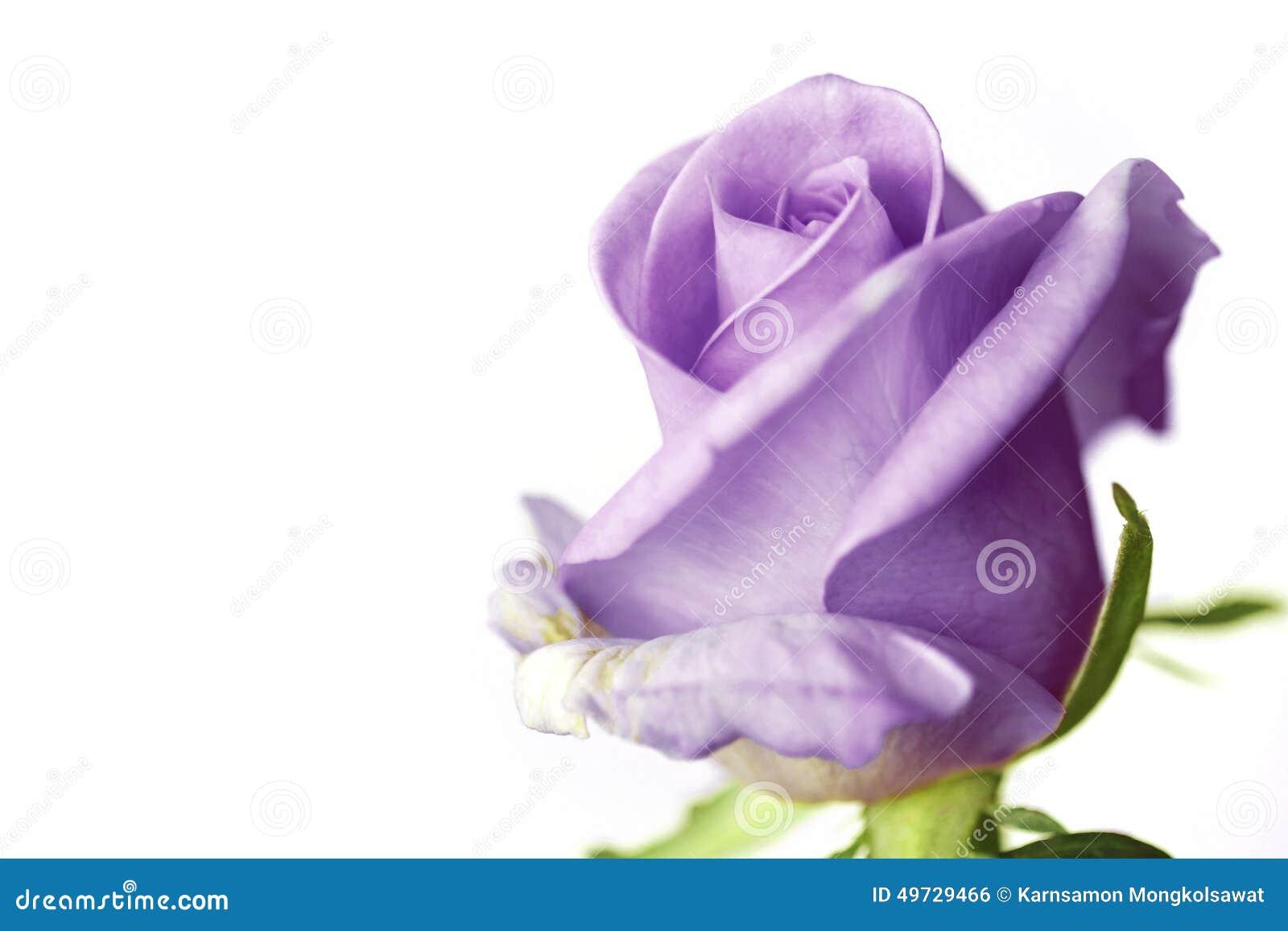 Sluit van purple steeg op witte achtergrond