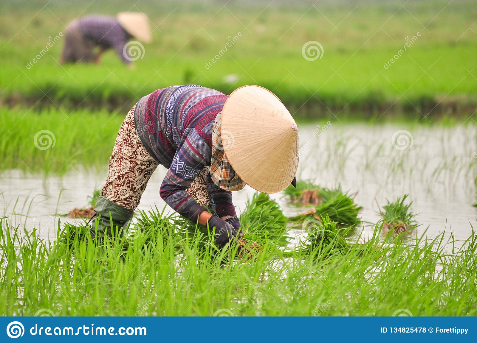 Sluit van vrouwen uitwerken aan padieveld