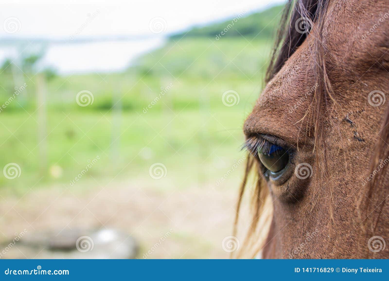 Slut upp av det bruna hästögat på solig dag