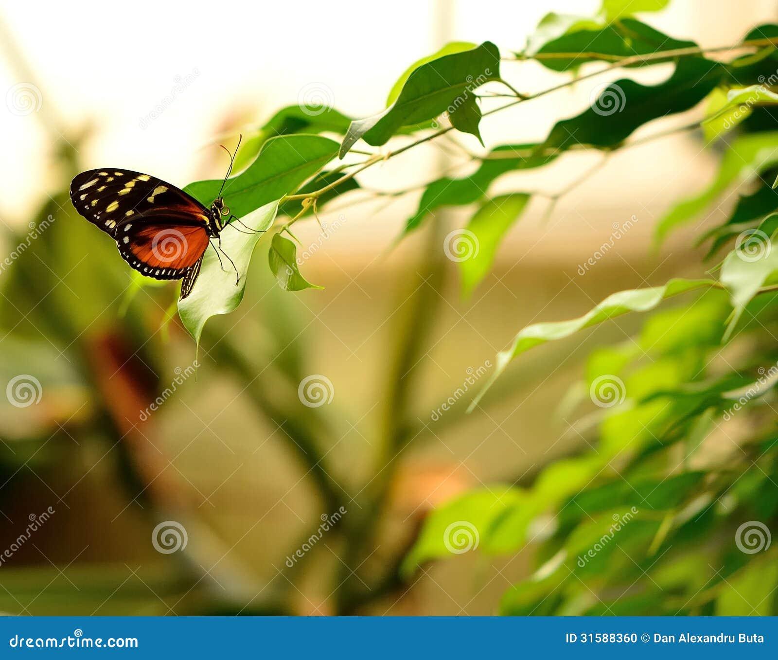 Slut upp av en härlig fjäril