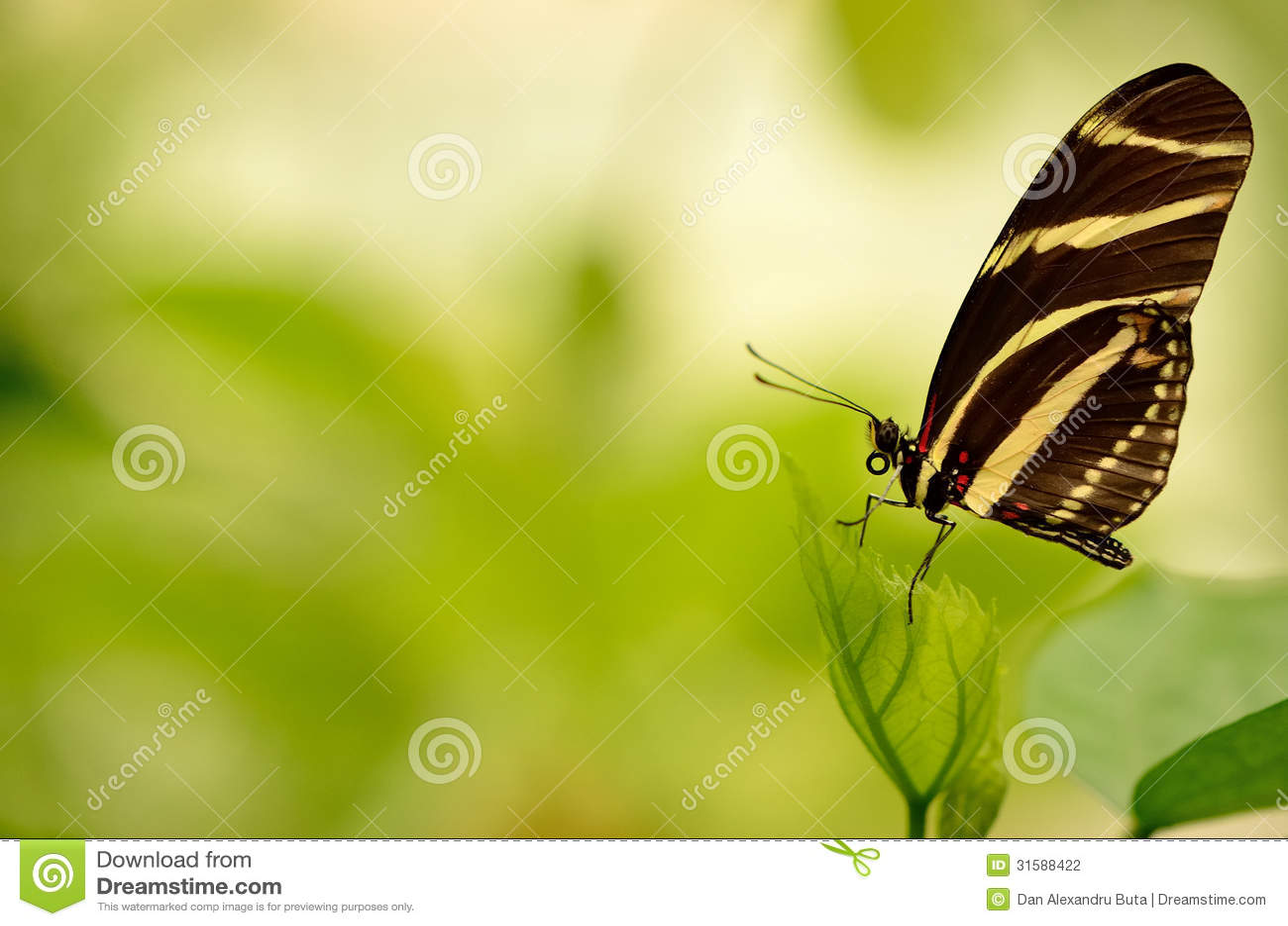 Slut upp av en härlig randig fjäril