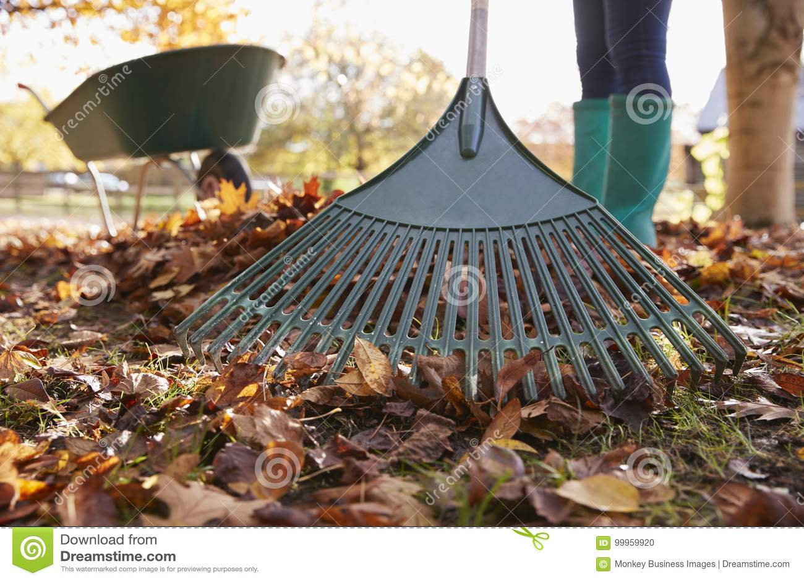 Slut upp av kvinnan som krattar Autumn Leaves In Garden
