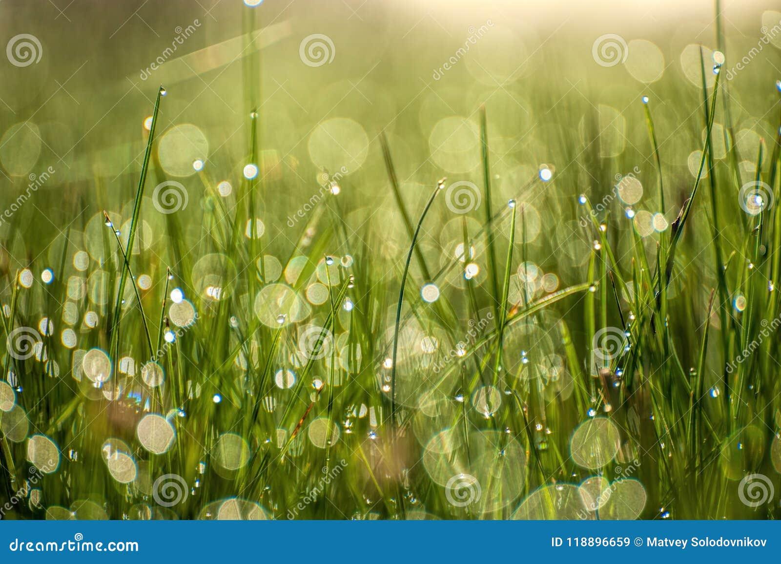 Slut upp makrobild av ljust ljus - grönt gräs som växer på suddig grön bokehbakgrund på solig vårmorgon