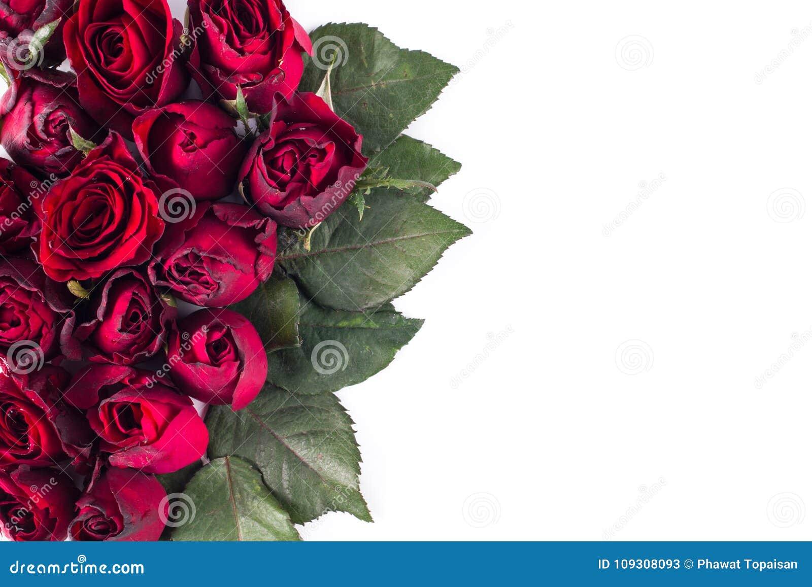 Slut upp naturliga röda rosor Hälsningkort med röda rosor och utrymme för text genom att använda som valentindag