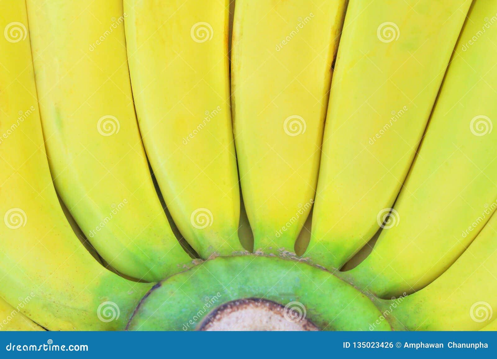 Slut upp ny gul bananbakgrund Gros Michel