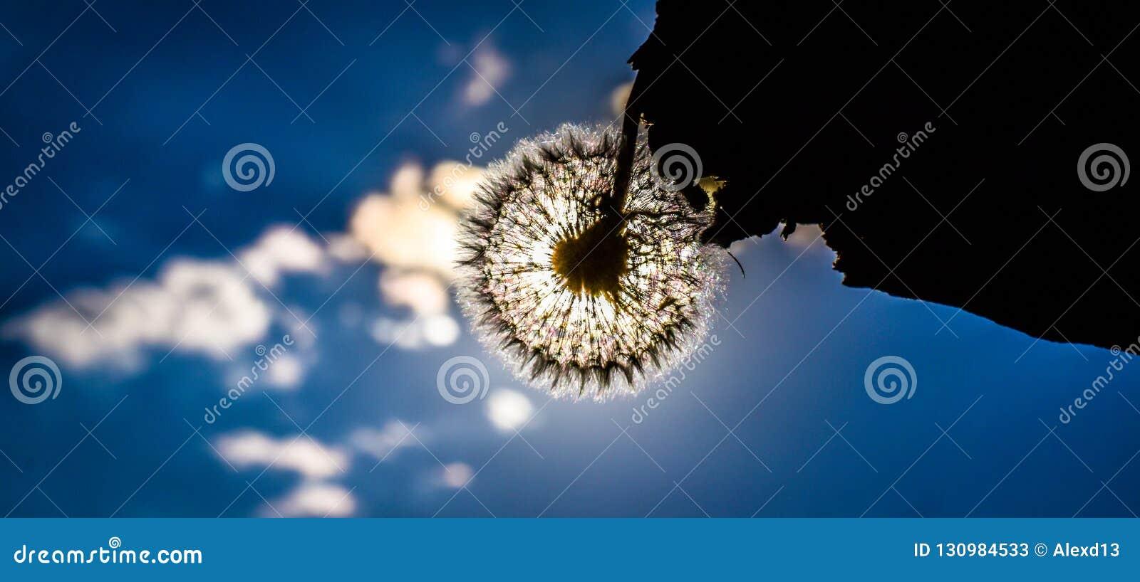 Slutet av sommar, en blomma mot himlen