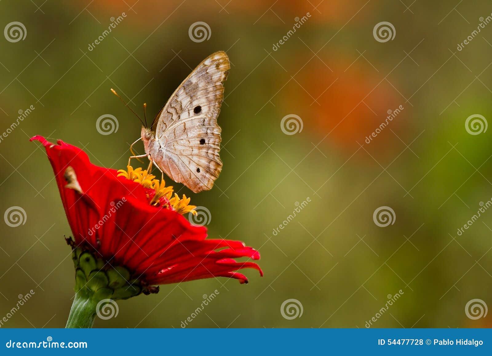 Slutet sköt upp av fjäril på rainforestblomman